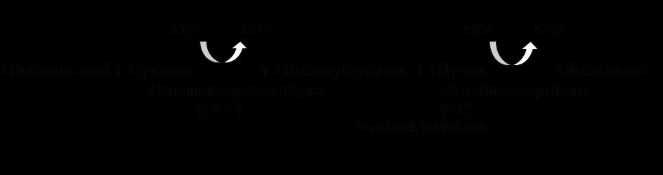 Glutathione Biochemistry