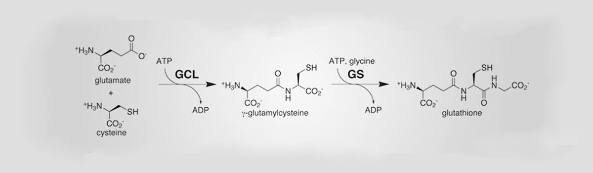 Glyteine and Glutathione